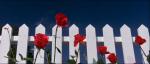 02.Roses
