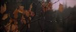 21.Leaves
