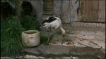 42.Stork