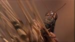47.Locust