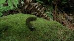 49.Slug
