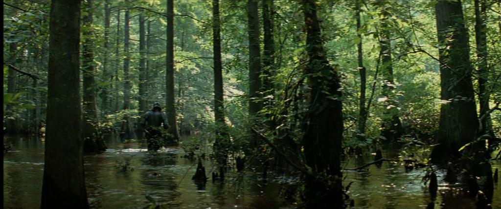 11.Swamp