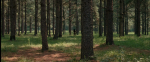 31.Forest
