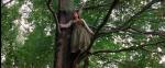 47.In Tree
