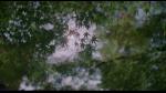 48.Leaves