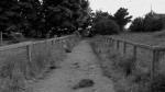 50.Pathway