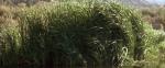 52.Grass