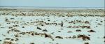 55.Desert