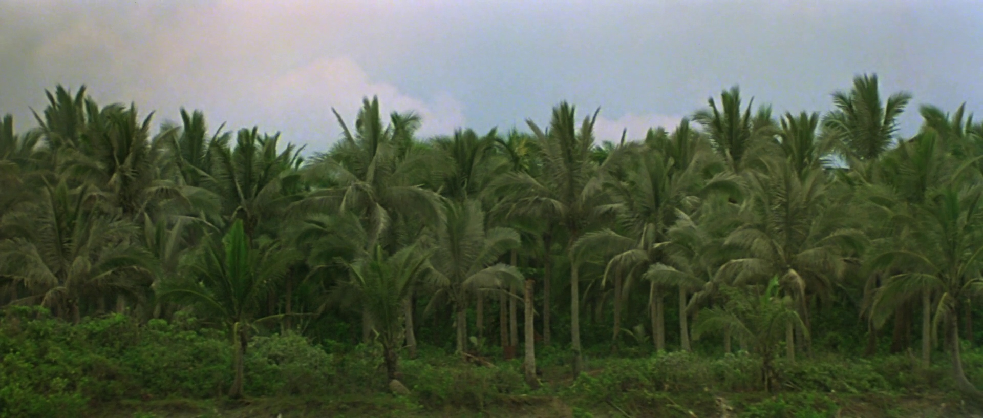 an analysis of cinematography in apocalypse now by francis ford coppola Apocalypse now (1979) is producer  best cinematography (vittorio  in fact apocalypse now, directed by francis ford coppola and.