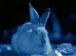 rabbits004